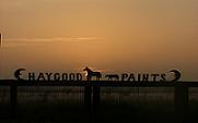 Halter stallions at stud AQHA and APHA palomino overo buckskin QH